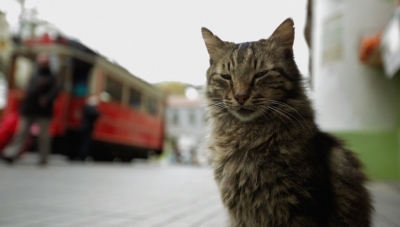 Discovering a City and the Meaning of Life from a 'Kedi' Perspective